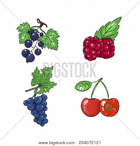 Collection set of hand drawn fruits isolated on white background. Vector illustration of currants grapes cherries and raspberries in vintage sketch style - stock vector