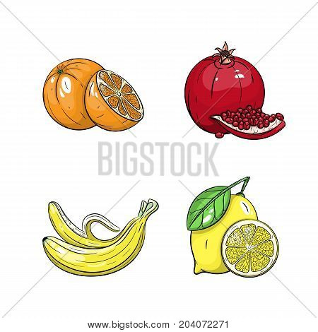 Collection set of hand drawn fruits isolated on white background. Vector illustration of orange garnet banana and lemon in vintage sketch style - stock vector