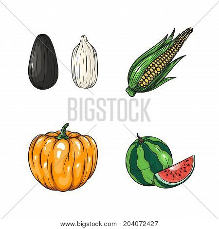 Collection set of hand drawn vegetables isolated on white background. Vector illustration of watermelon pumpkin corn and sunflower seed in vintage sketch style - stock vector
