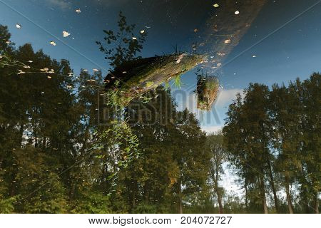 Incredible visual effect of space. Landscape with forest pond and driftwood in the water. Inverted image. Old tree in the pond.