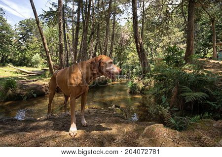 hiking with dog in Arvi park a popular place in the proximity of Medellin Colombia