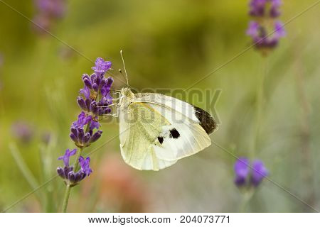 Soft focus butterfly and flower with blurry background macro