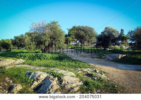 Olive trees park on Acropolis Hill, Athens, Greece
