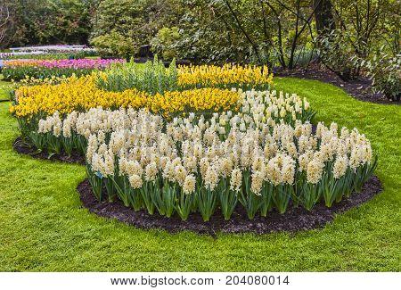 Beautiful flowers in bloom in Netherlands Europe.
