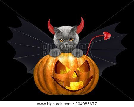 halloween pumpkin with cute cat in bat costume - isolated on black background