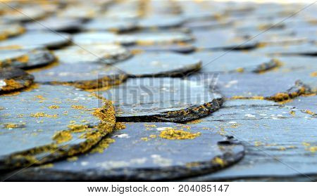 Shallow focus shot of slate tiles on a flat roof covered in lichen