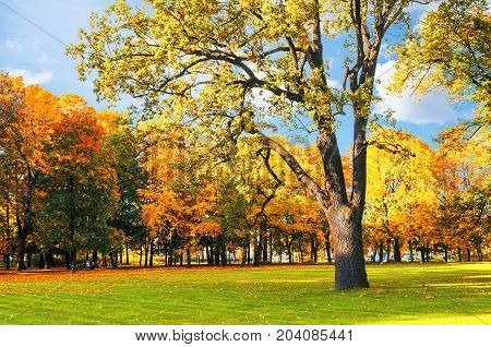 Autumn picturesque landscape. Sunny autumn landscape park with golden autumn trees. Deciduous autumn tree in the sunny autumn park. Colorful autumn landscape scene