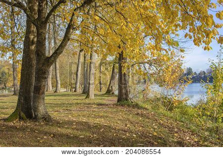 Autumn colors trees and plants Blue lake park Oregon.