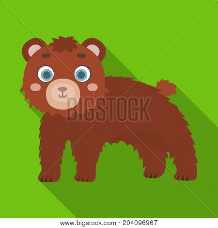 Bear, single icon in flat style.Bear, vector symbol stock illustration .