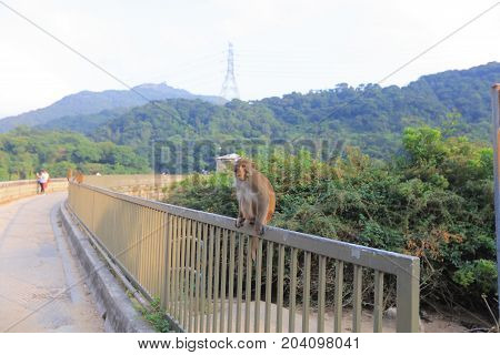 Monkey In Kam Shan Country Park, Kowloon