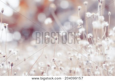 Meadow flowers beautiful fresh morning in soft warm light. Vintage autumn landscape blurry natural background.