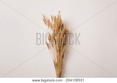 Dried Wheat Branches