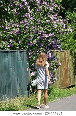 Woman walks next to a mallow bush on the street