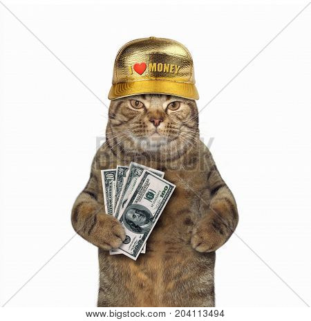 The rich cat counts his money. White background.