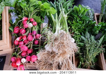 Display of organic produce at a farmers market in New Zealand NZ - radishes green garlic herbs sage basil mint thyme