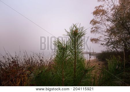 Fir twigs with dew drops and soft background