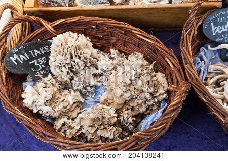 Grifola Frondosa,  Polypore Mushrooms
