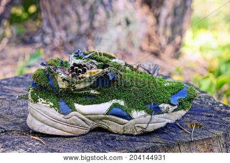 old sneaker overgrown with green moss is on a dry stump