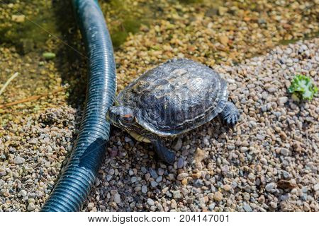 Marine Waterfowl Turtle