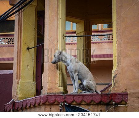 A dog sitting at old ghat on Ganges riverbank in Varanasi India.