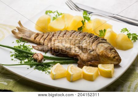 Tasty fish white background close-up fresh wet