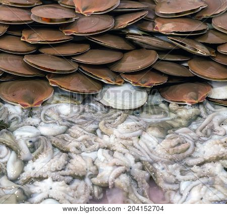 Scallop Shell On Ice