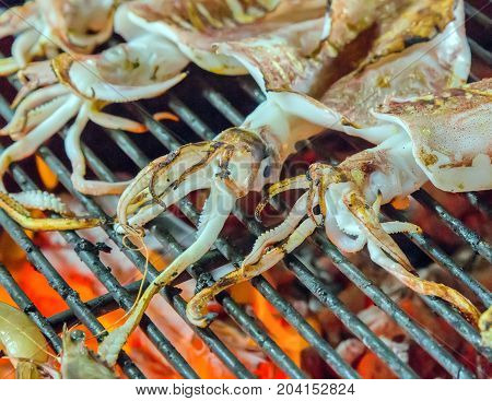 Squid Bbq Calamari Seafood Cuisine Barbecue.