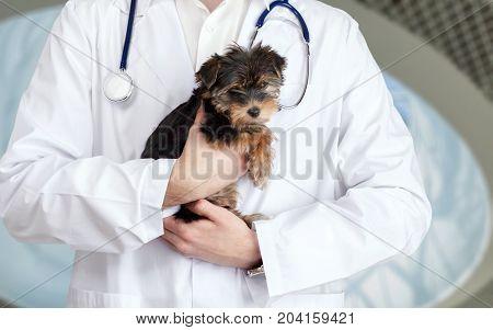 Dog doctor veterinary vet examined table white