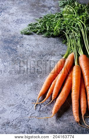 Bundle of fresh organic carrot with haulm over gray texture background.
