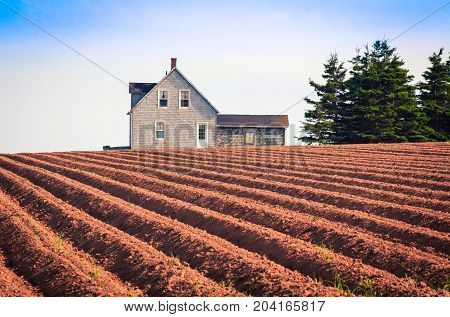 Rows of red soil in prince Edward island