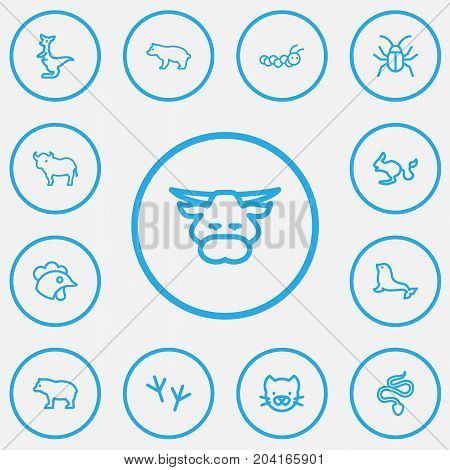 Set Of 13 Editable Zoo Outline Icons. Includes Symbols Such As Beetle, Predator, Buffalo And More