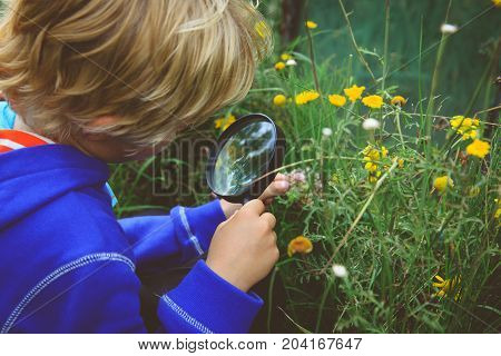 Little boy examining flowers using magnifying glass, kids learning