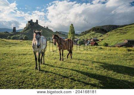 Two horses at a mountain valley at unset. Georgian defensive towers at the background. Sun lightens horses. Landscape of a mountain valley with green grass and two horses. Traditional architecture in Georgia