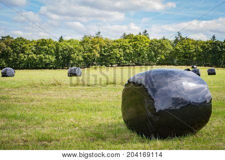 Bailed haylage on a North Devon farm.