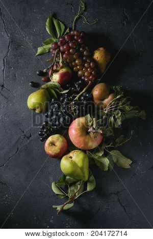 Variety of autumn fruits ripe organic apples, three kind of grapes, pears with leaves over dark texture background. Top view with space. Food background