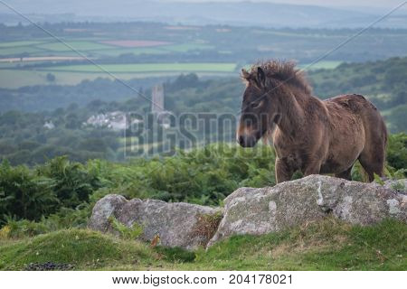 Wild foal on Dartmoor national park. Taken due to the awesomeness of his mane.
