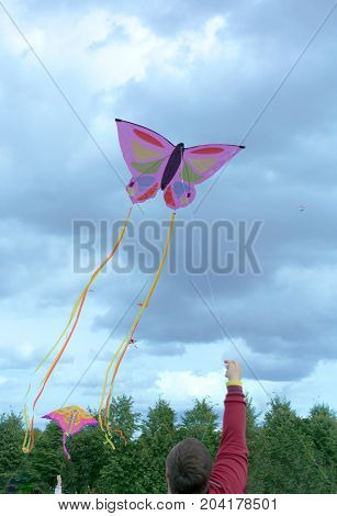 A Purple Butterfly On The Kite