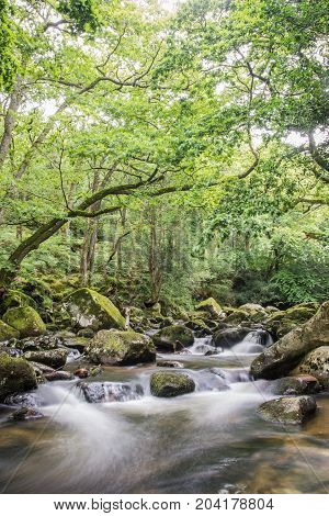 Long exposure photography of river meandering through ancient forest of Dartmoor, UK.