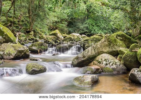 Rocky river through the forest of Dartmoor.