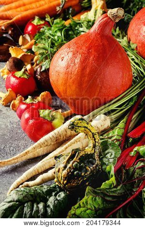 Variety of autumn harvest vegetables carrot, parsnip, chard, paprika, hokkaido pumpkin, porcini and chanterelles mushrooms over gray texture background. Fall harvest concept. Close up