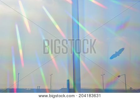 Prismatic sun rays on glass barrier with flying bird silhouette. Distant highway and street lights.