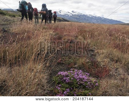Icelandic landscape with mountains, sky and hikes. Trekking in national park Landmannalaugar.