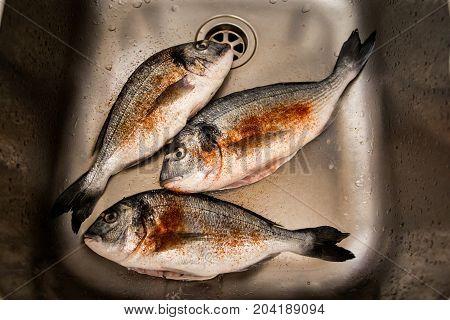 Framed and seasoned fresh organic dorada fish