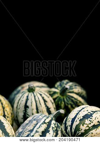 Striped green pumpkins halloween background on black. Organic vegetables still life. Shallow depth of field photo, copy space.