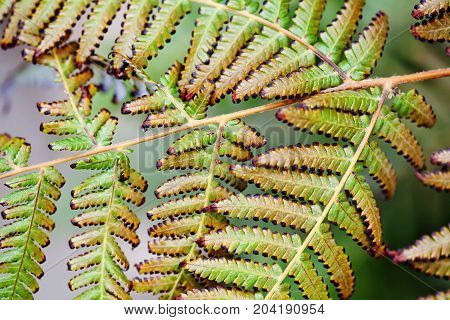 Aging fern leaves macro view. Beautiful abstract floral pattern photography. Selective focus.