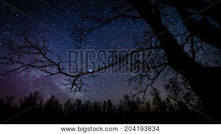 Colorful Milky Way Galaxy Seen In Night Sky Through Black Trees