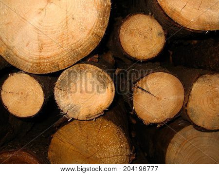 tree logs background. The log in section