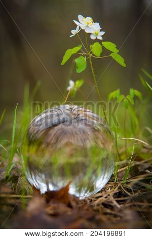 Fortune tellers magic glass crystal ball in spring forest