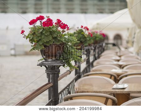 red geranium flower pots on empty restaurant café garden fencing on old city street