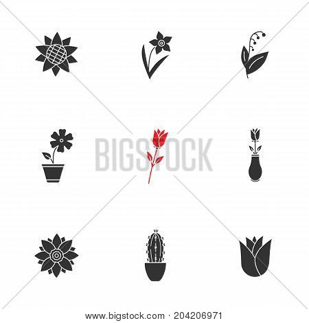 Flowers glyph icons set. Silhouette symbols. Sunflower head, daffodil, may lily, hibiscus, roses, lotus, cactus, rosebud. Vector isolated illustration